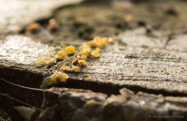 funghi-on-treestump
