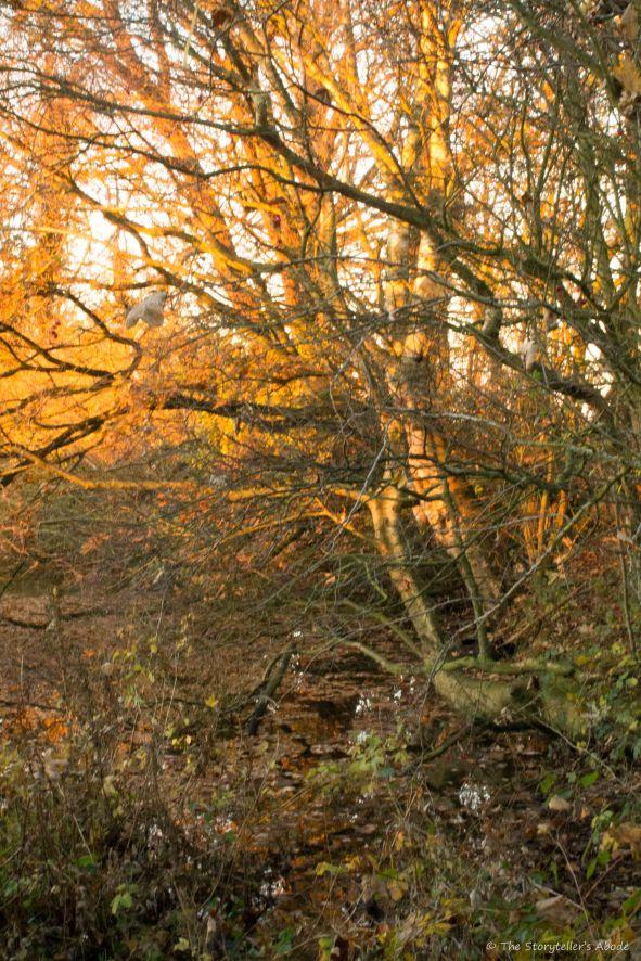 golden-light-over-stream