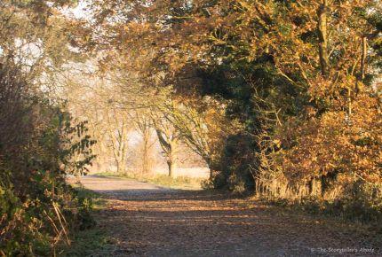 late-november-lane