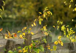leaf-bound-fence-6