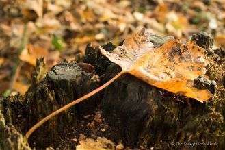 leaf-on-treestump-2