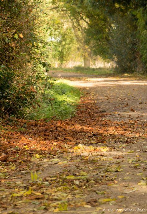 leaves-on-lane-2
