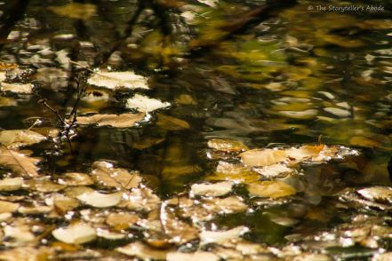 leaves-on-the-water