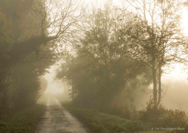misty lane.jpg