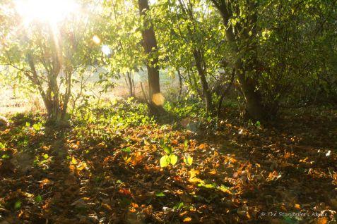 sunburst-on-fallen-leaves