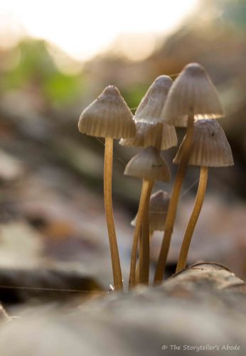 toadstool-cluster