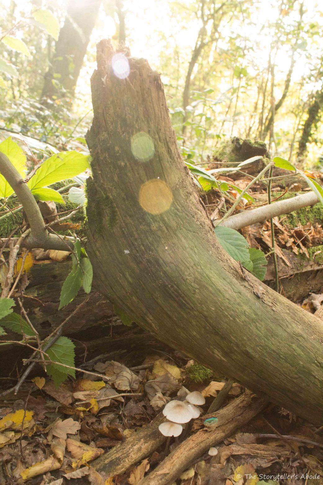 toadstools-under-log