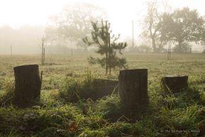 treestumps-on-misty-morning