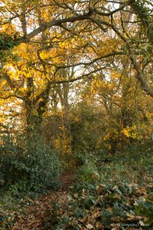 wooded-path-2