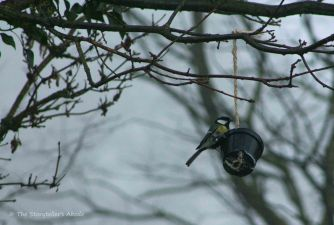 blue-tit-on-feeder