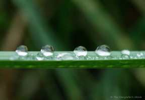 droplets-on-grass