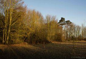 edge-of-meadow