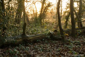 fallen-log