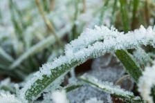 frosty-grass