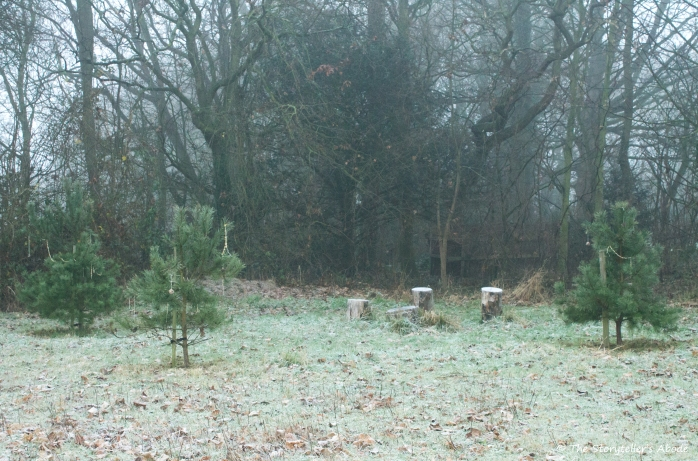 frosty-trees-and-stumps