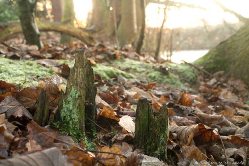 jagged-stumps-with-fallen-leaves
