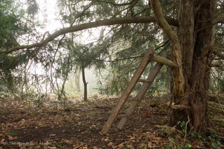 ladder-on-misty-morning