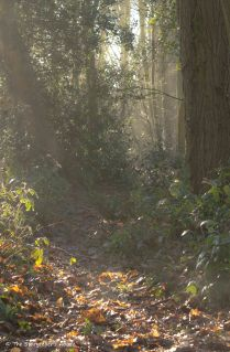 misty-woodland-view-2