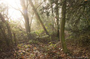 misty-woodland