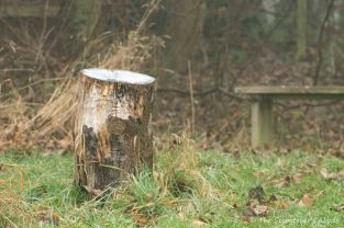 stump-with-bench