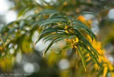 sunlit-winter-green-2