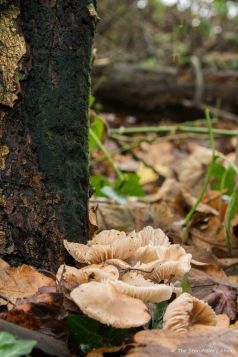 toadstools-by-tree-trunk