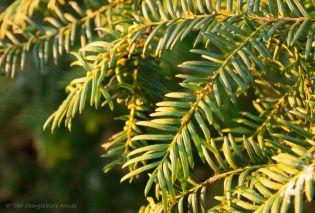winter-green-2