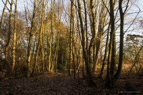 wooded-area