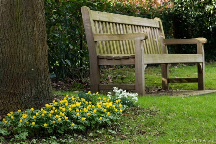 aconites-by-bench