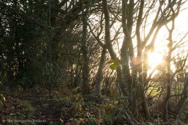 dawn-light-through-trees