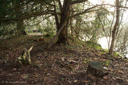 streamside-camp
