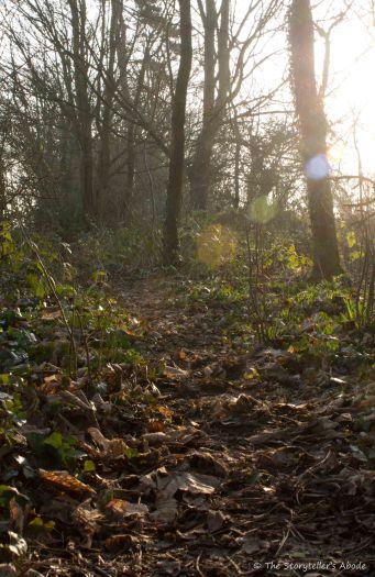 sunbeams-on-wooded-path