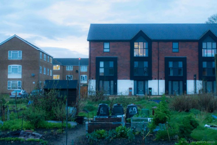 Evening over Allotments 2