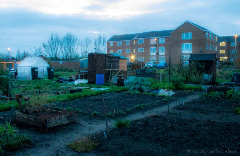 Evening over Allotments