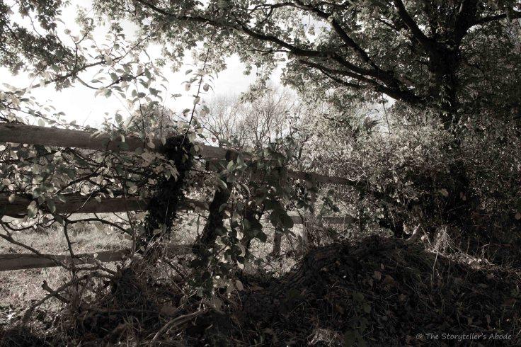 Meadow Fence.jpg