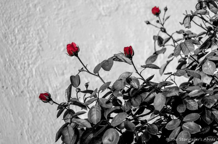 Roses b and w with dash of colour