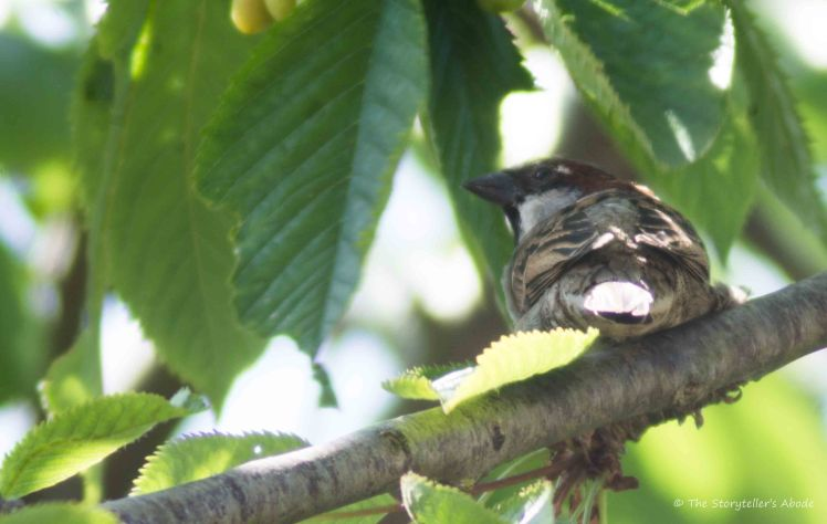 Sparrow in Feeding Tree 6