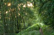 Golden Light on Path