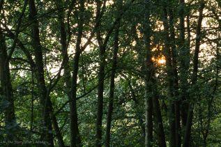 Golden Light Through Trees