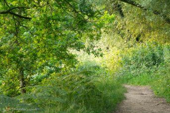 Path in golden light 2
