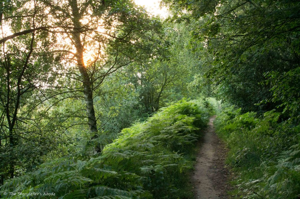 Path in golden light
