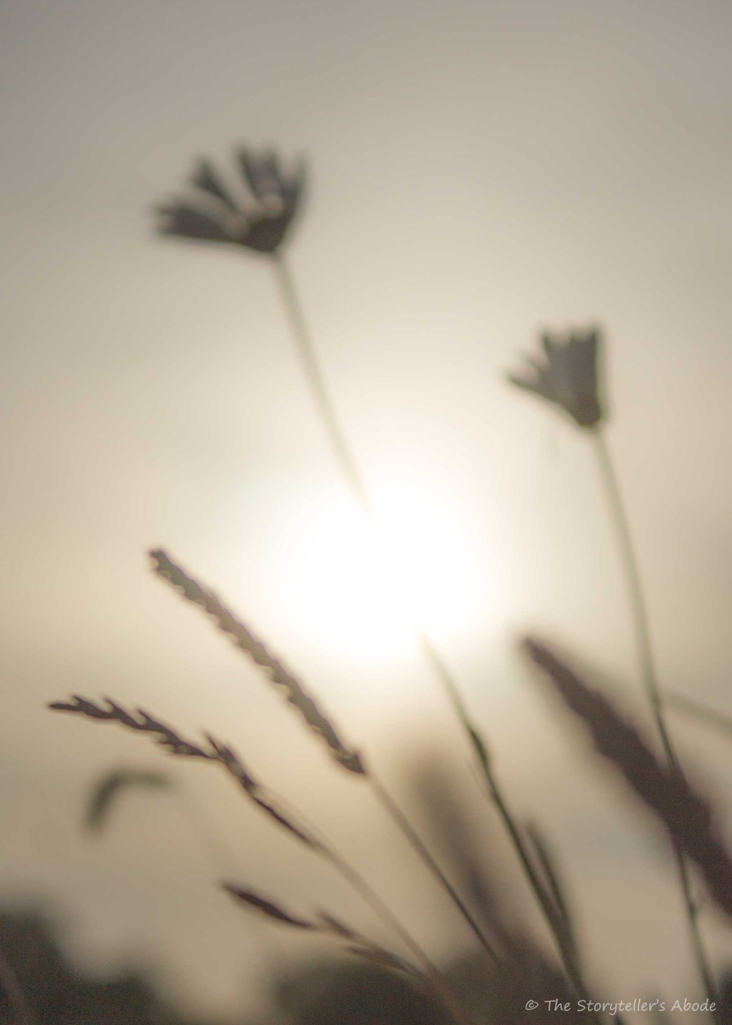Long Grass in Dawn Light