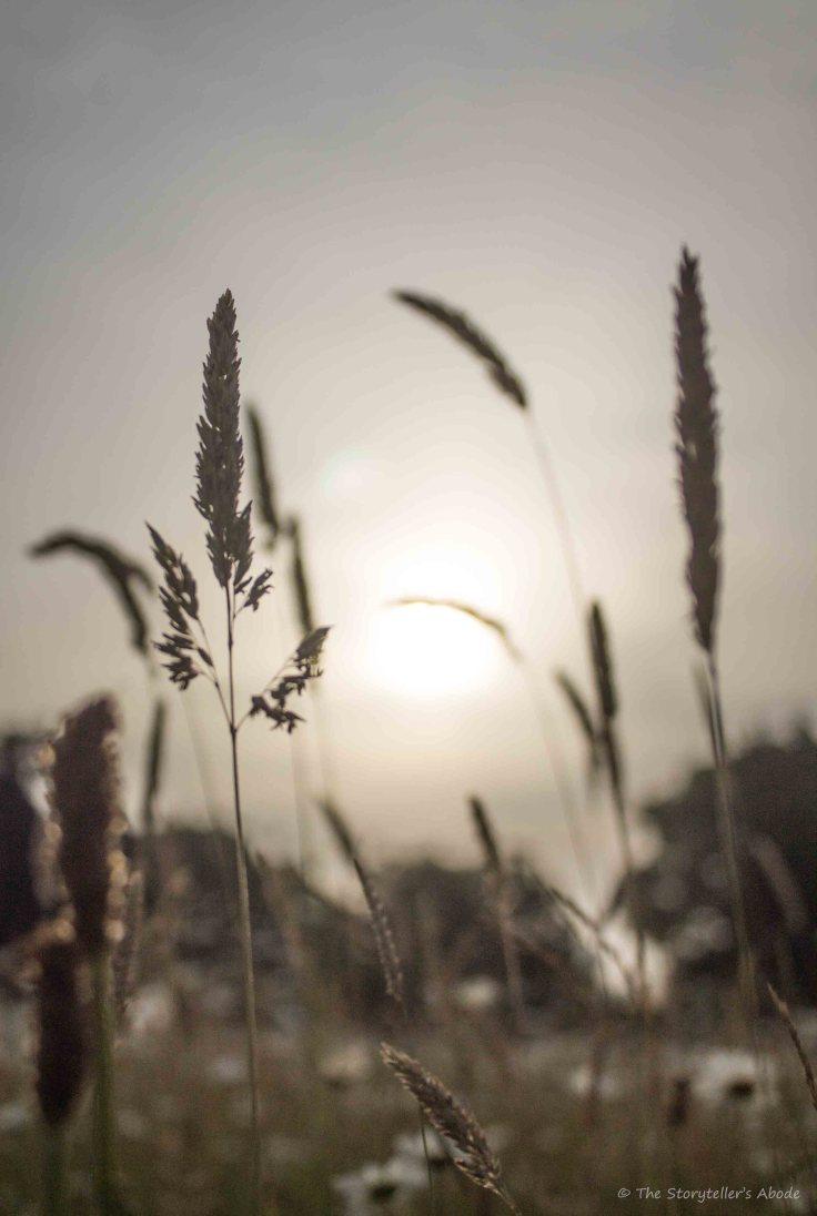 Meadow in Dawn Light