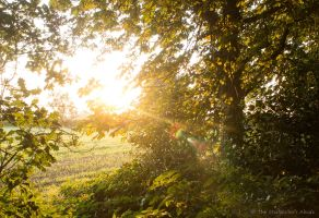 Dawn Light Through Trees