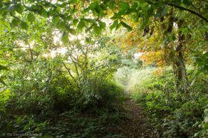 Dawn-lit Path