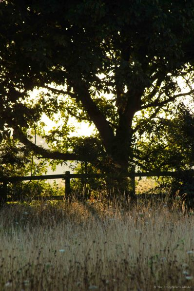 Fence in Early Light