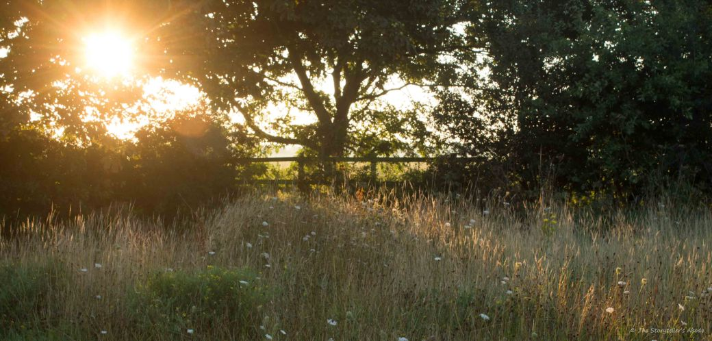 Meadow at Dawn 2