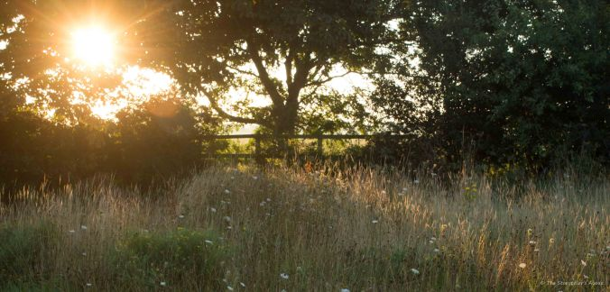 Meadow at Dawn 2