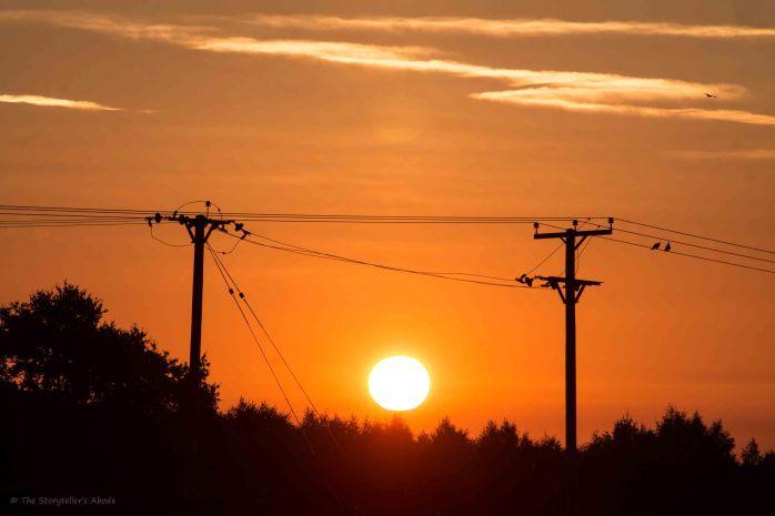 Sunrise with telegraph poles