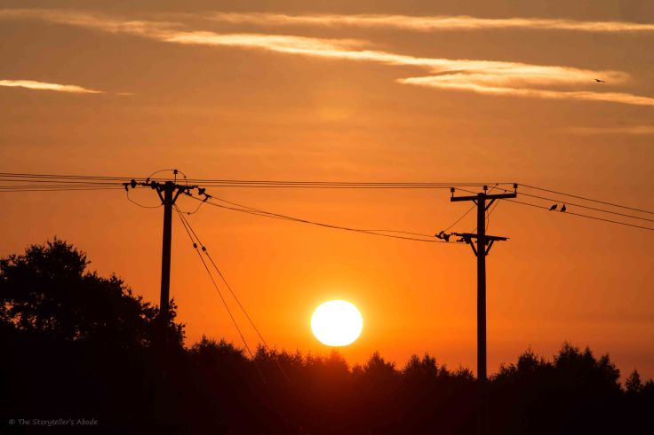 Sunrise with telegraph poles